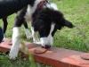 activity_kutyaiskola (1)