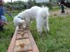 activity_kutyaiskola (2)