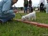 activity_kutyaiskola (6)
