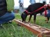 activity_kutyaiskola (4)