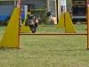 agility_kutyaiskola (1)