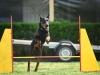 agility_kutyaiskola (3)