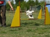 agility_kutyaiskola (5)