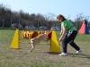 kutyaiskola_agility (3)