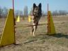agility_kutyakikepzes_kutyakozpont-10