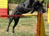 agility_kutyakikepzes_kutyakozpont-6
