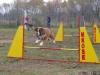 agility_kutyasport_kutyakozpont-1