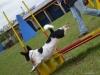 agility_palya_berles-3