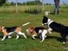 kutyanapkozi (3)
