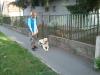 bentlakasos-kutyakikepzes-3