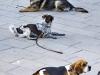 04_engedelmes_kutyakikepzes