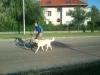 kutyakikepzes_kutyakozpont_kutyaiskola-34