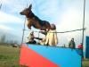 kutyasuli-9