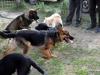 kutya_szocializacio_ingyen-3