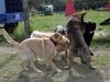 kutya_szocializacio_ingyen-6