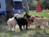 kutya_szocializacio_ingyenes-1
