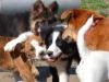 kutya_szocializacio-1