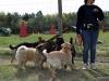 kutya_szocializacio_ingyenes-2