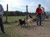 kutya_szocializacio_ingyenes-3