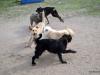 kutya_szocializacio_ingyenes-4