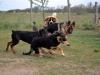 kutya_szocializacio_ingyenes-5