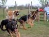 kutya_szocializacio_ingyenes-6
