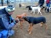 kutya_szocializacio-4