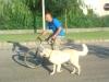 kutyaoktatas_kerekpar_kutyakozpont-5