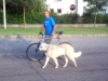 kutyaoktatas_kerekpar_kutyakozpont