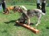 halado_csoport_kutyakuzpont-2