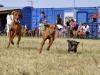 kutyaiskola_berles-40