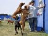 kutyaiskola_berles-41