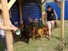 kutyaiskola_berles-45