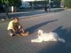 kutyakikepzes_haznal-1