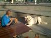 kutyakikepzes_haznal-15