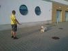 kutyakikepzes_haznal-19