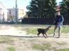 kutyakikepzes_haznal-2