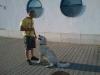kutyakikepzes_haznal-20