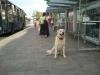 kutyakikepzes_haznal-9