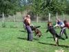 orzovedo_kutyakikepzes_kutyakozpont