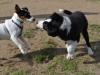 kutyaovoda-1