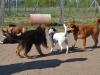kutyaovoda-2
