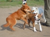 kutyaovoda-4
