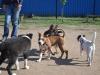 kutya_ovoda