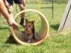 kutyakikepzes_jutalomfalattal_kutyakozpont-3