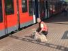 napkozis_kutyakikepzes-20