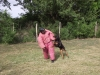 orzo_vedo_kutyakikepzes_kutyakozpont-1