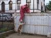 orzo_vedo_kutyakikepzes_kutyakozpont-8