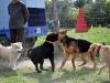kutya_szocializacio (3)