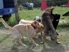 kutya_szocializacio (4)